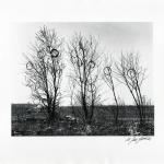 Strange Fruit (aka Tires in Trees), Brooklyn, 1950