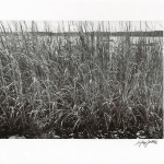 Sea Grasses, Lloyd Harbor, NY,1998